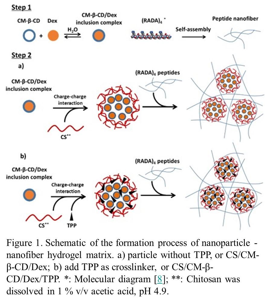 Bacterial Drug Delivery System