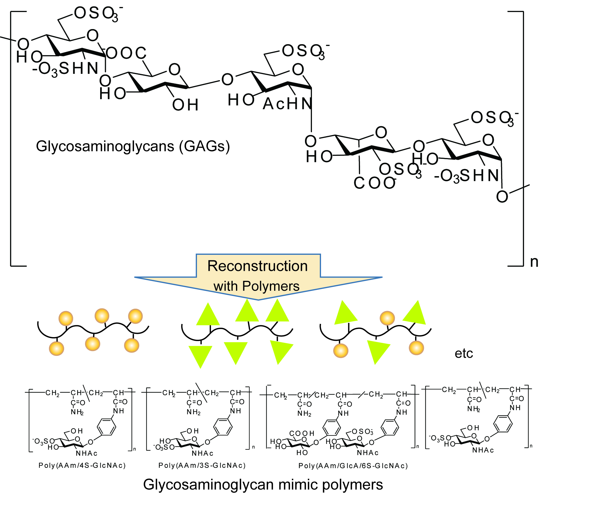 Sulfated Glycopolymers For Glycosaminoglycan