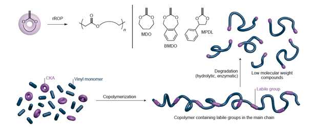 Frontiers Biodegradable Vinyl Polymers Synthesized By
