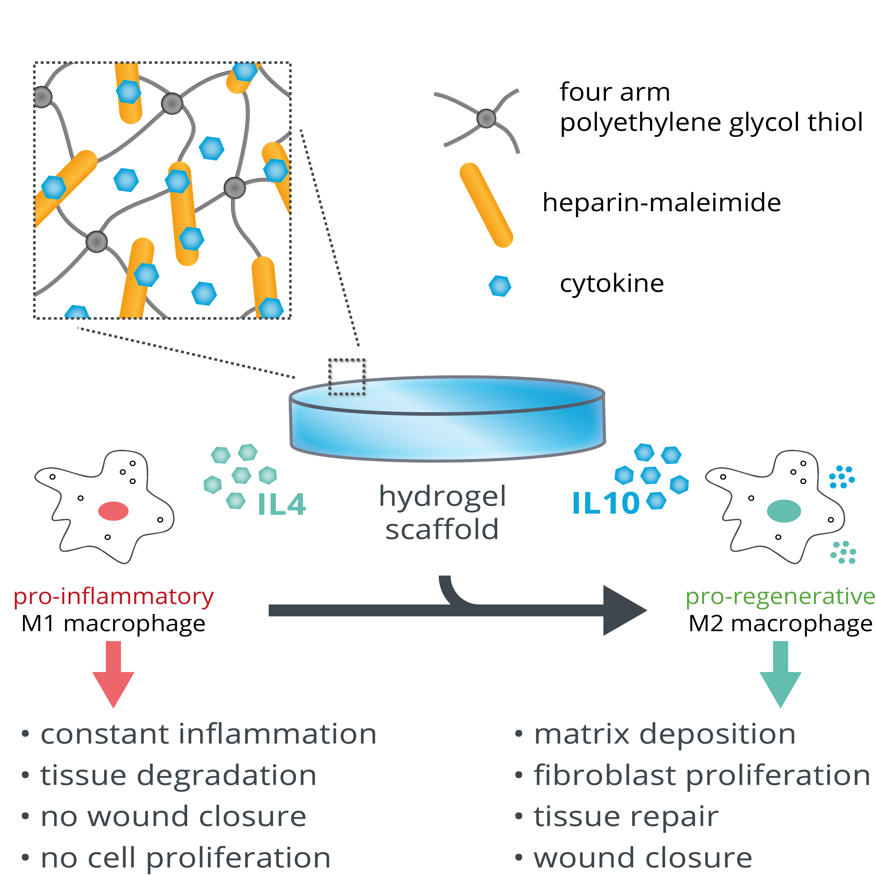 Multiplex Definition Frontiers Glycosaminoglycan Biohybrid Hydrogels For