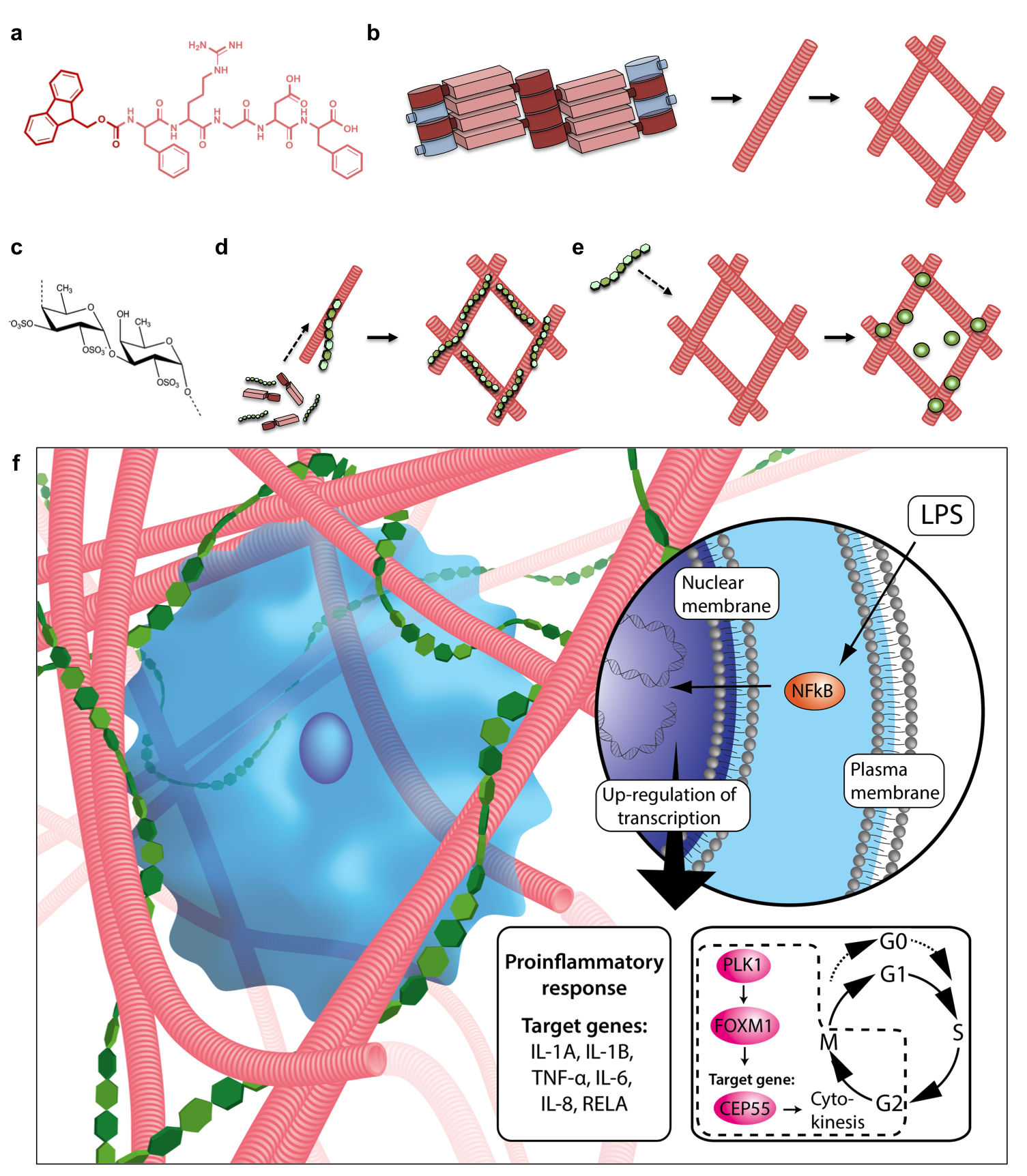 Frontiers | Self-assembled multifunctional nanogel reduces