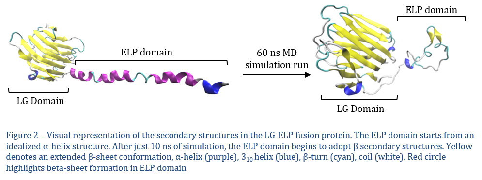 Frontiers | Design and simulation of a self-assembling laminin