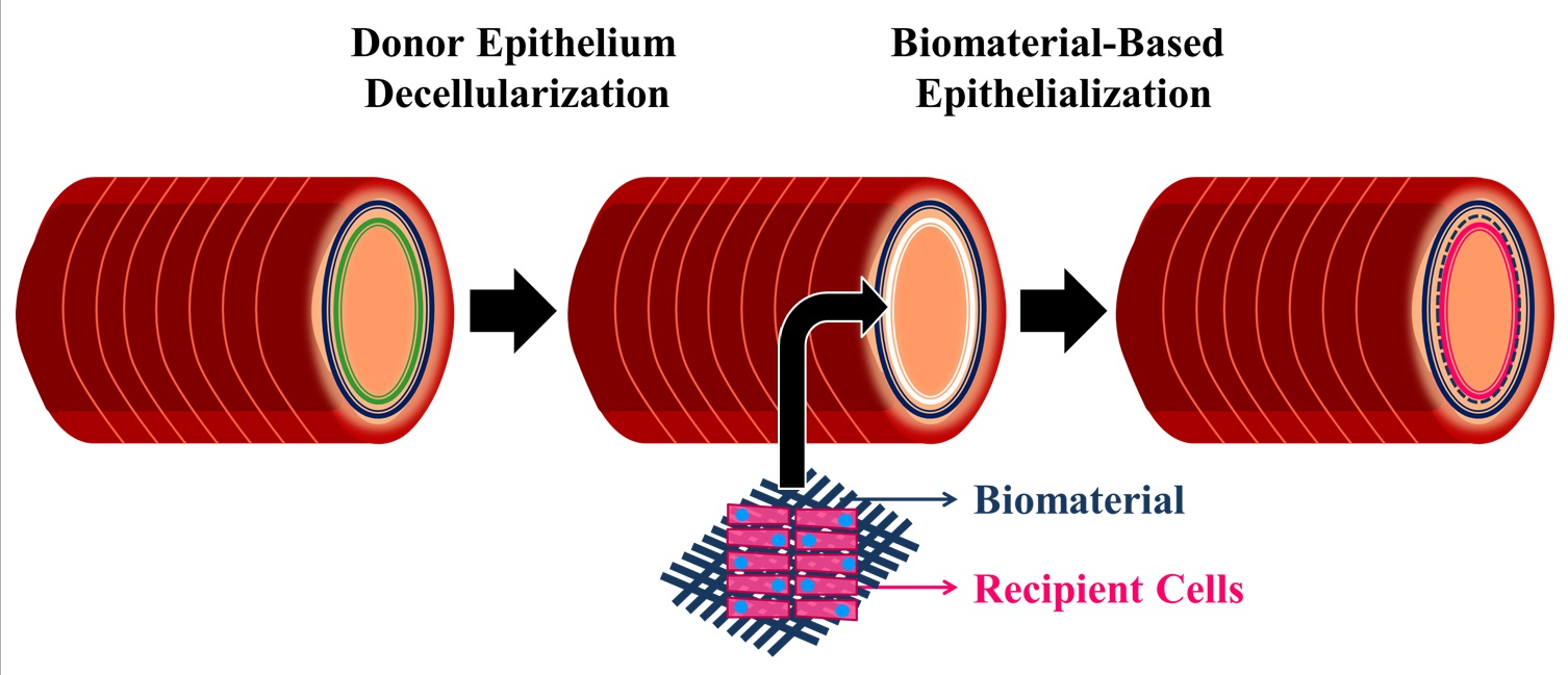Frontiers | Development of a biomaterials-based functional ...