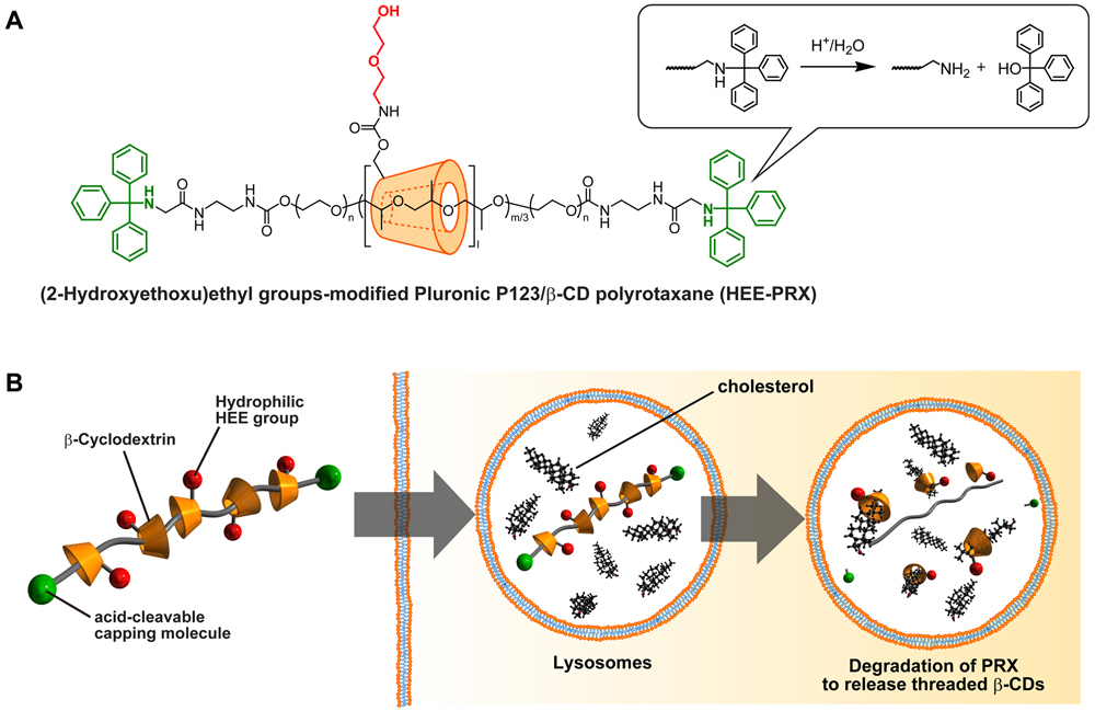 Frontiers Therapeutic Approach To Lysosomal Storage Disorders Based On Acid Labile Polyrotaxanes