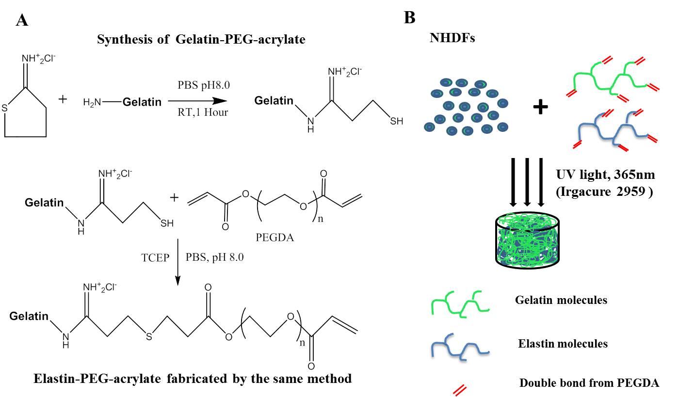 Chemical Properties Gelatin